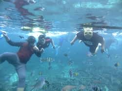 Pahawang, Bermain Bersama Nemo dan Pasir Putih